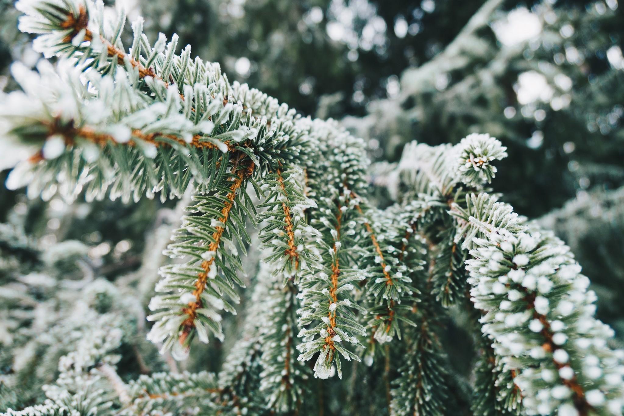 عطور فاخرة تليق بك هذا الشتاء